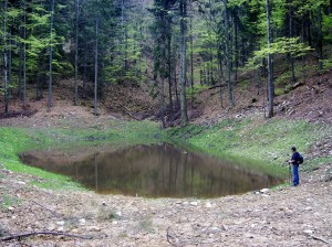 Fot. 1. Jeden ze sztucznych zbiorników retencyjnych w lasach Beskidu Sądeckiego.